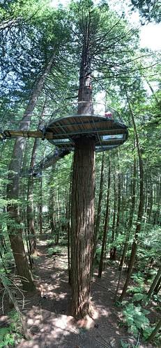 Redwoods tree walk