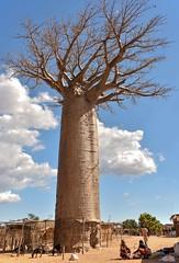 Village Baobab