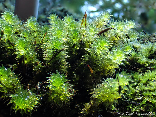 Moss water filled