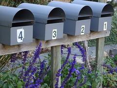 Lavender Addresses