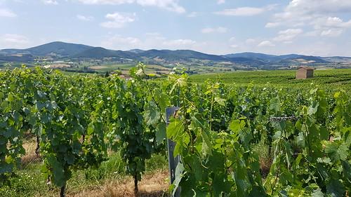 2020-06 Vtt - Entre vignes et pierres dorées