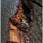 Up close with bark