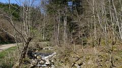 Südschwarzwald - Im Haselbachtal