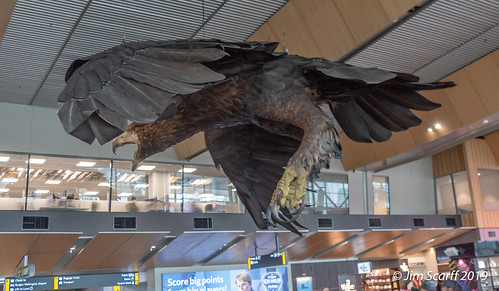 Giant statute of the extinct Haast's eagle (Harpagornis moorei)