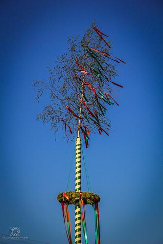 Und hoch oben thront der Maibaum…