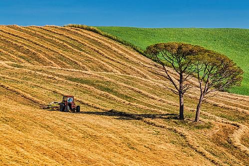 Coltivare un campo - Cultivate a field