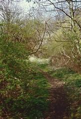 Path to Echo Hill, Craiglockhart, Edinburgh, April 1990