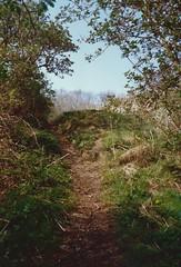 Up to Echo Hill, Craiglockhart, Edinburgh, April 1990