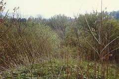 Echo Hill, Craiglockhart, April 1990