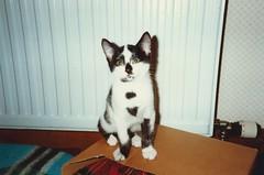 Little Bhuna, Nov 1990
