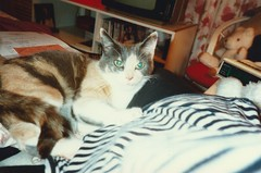 Daisy, Sept 1990