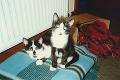 Kitten Bhuna and Bhaji, Nov 1990