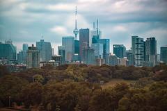 City skyline from Riverdale Park 1645