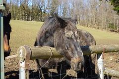 Horse @ Ballaison