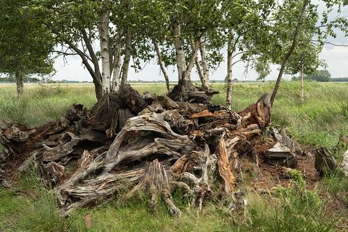 Berkjes op kienhout