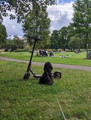 Dexter, Victoria Park, Edinburgh, June 2020