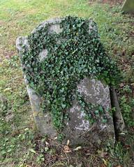 All Saints Church, Nazeing, Essex, England ~ churchyard stone with ivy