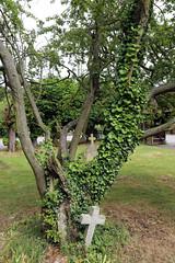 All Saints Church, Nazeing, Essex, England ~ churchyard east ivy, tree, and cross