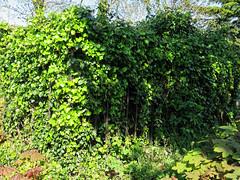 All Hallows Church Tottenham London England - churchyard overgrown tomb fence 1