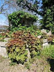 All Hallows Church Tottenham London England - churchyard chest tomb overgrown 6