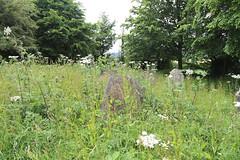 All Saints Church, Nazeing, Essex, England ~ churchyard overgrown stones at east