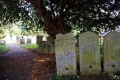 All Saints Church Stourmouth Kent England ~ south path Culmer gravestones