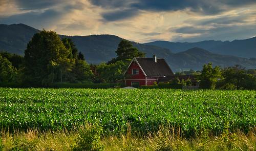 Rural scene - explored! Thanks!