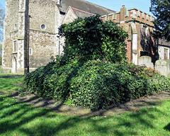 All Hallows Church Tottenham London England - churchyard chest tomb overgrown 1