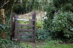 Abbess Roding - St Edmund's Church - Essex England - churchyard west gate in ivy hedge 2