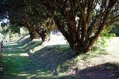All Saint's Church Chillenden Kent England - churchyard path and yews