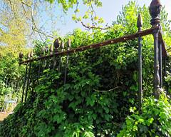 All Hallows Church Tottenham London England - churchyard overgrown tomb fence 4
