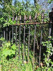 All Hallows Church Tottenham London England - churchyard overgrown tomb fence 2