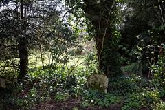Abbess Roding - St Edmund's Church - Essex England - west churchyard woodland walk 02