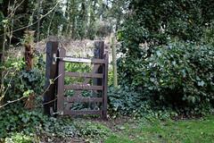 Abbess Roding - St Edmund's Church - Essex England - churchyard west gate in ivy hedge