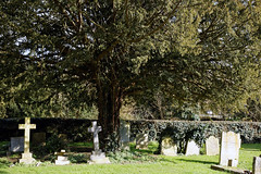 Abbess Roding - St Edmund's Church - Essex England - churchyard at east with yew tree