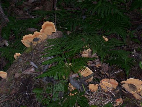 Allyn River Rainforest Trail