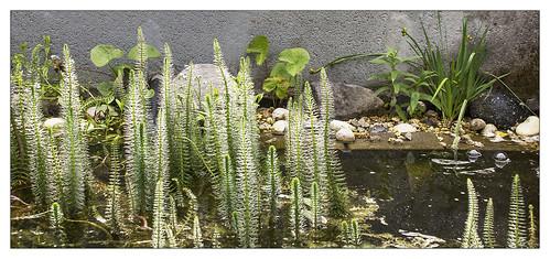 Into my garden-DSC_1138