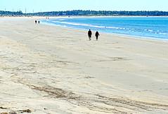 NS-08205 - Crescent Beach