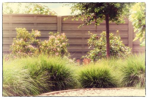 Into my garden-DSC_1137
