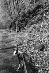 Satoshi on the Trail