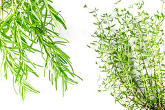Fresh herbs rosemary and thyme on a white background