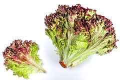 Green-red lettuce on a white background