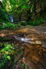 Une impression de forêt équatoriale