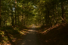 Weg in het bos (137FJAKA_3980)