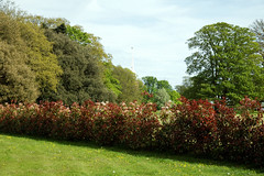 Front lawn hedge Quex House Birchington Kent England