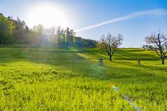 Meadow and sun