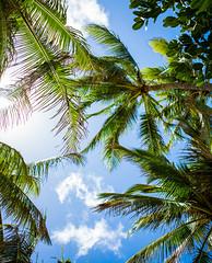 North Shore Hawaii Palm Trees