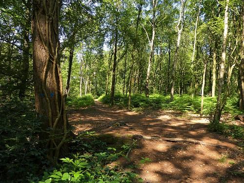 Nature area Dottinkrade near Winterswijk