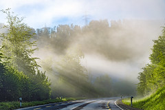 Mist over the road