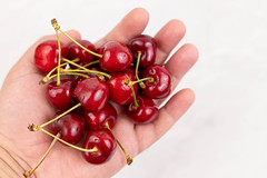 Cherries pile in the hand with copy space